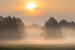 misty dawn in a clearing oak grove