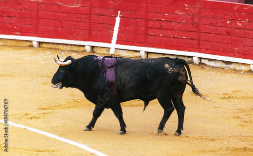 Fotobehang Stierenvechten A large Spanish bull fighting. Spanish bullfight.