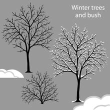Winter Trees Set - Bare Tree, ...