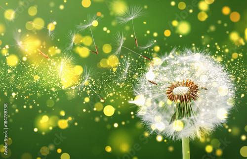 Dandelion flying on overly background