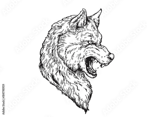 9ce0f20c1 Detail Realistic Hand Drawing Angry Wolf Head Illustration - Buy ...