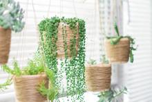 Various Succulents In Similar ...