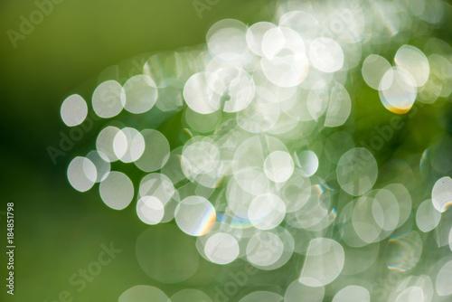 Staande foto Paardebloemen en water Abstract natural bokeh background in green and yellow tones with sun light