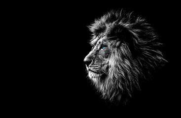 lion in black and white wit...