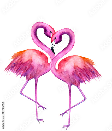 watercolor illustration of two flamingos Isolated on white background