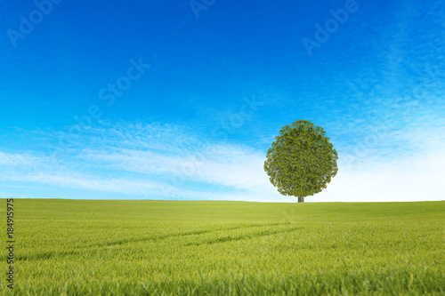 Foto auf Gartenposter Hugel Old oak tree on a green meadow against a blue sky