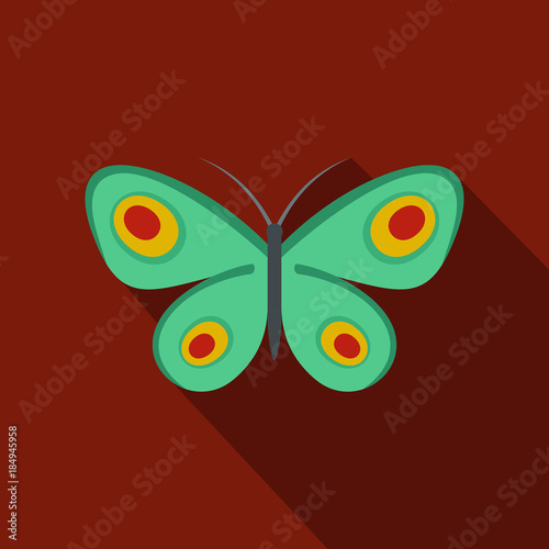 Fotografía  Unknown butterfly icon