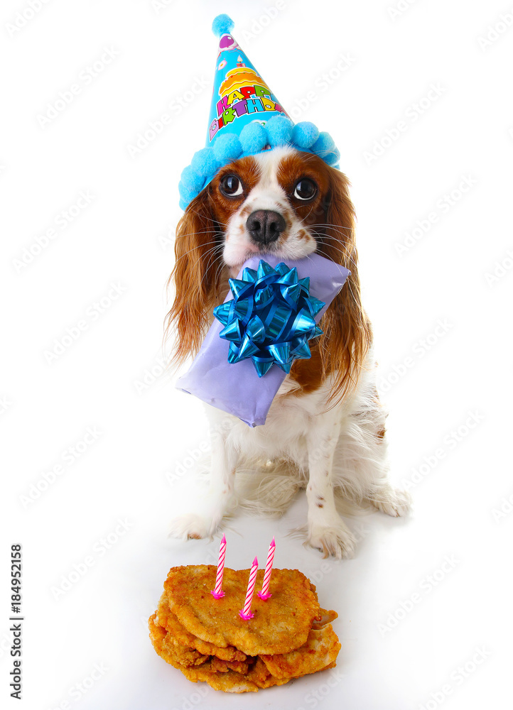 Happy Birthday Dog Photo Foto Poster Wandbilder Bei EuroPosters