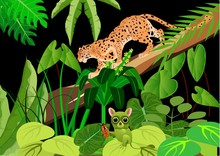 Leopard And Tarsier In The Nig...