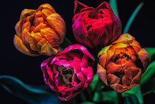 Surrealistic Bouquet Of Four R...