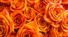 Beautiful Orange Roses Bouquet Background
