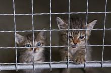 Abandoned Little Kittens In An...