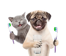 Cat And Dog With  Toothbrushes...