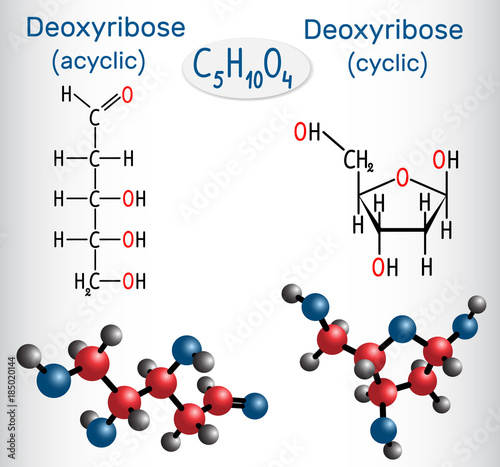 Linear form (acyclic) of deoxyribose and deoxyribose (cyclic form) molecules, th Canvas Print