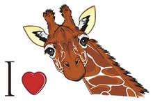 Giraffe, Animal, Neck, Long, O...