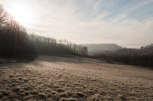 Frosty Frozen Grass In Winter Time, Cold Morning In Nature Blue, Sunshine Through Trees