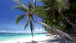 Tropical beach with coconut palm and turquoise water, travel destinations