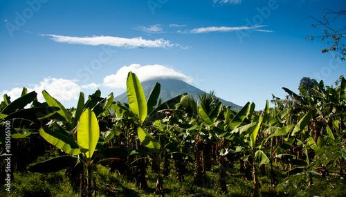 Obraz na płótnie Banana plantation with volcan Concepcion, Nicaragua, Central Amerika