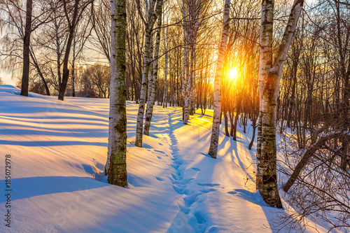 Photo Stands Road in forest Colorful sunset in winter forest
