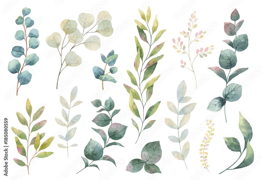 Ręcznie rysowane wektor zestaw akwarela ziół, kwiatów i przypraw. <span>plik: #185080559   autor: elenamedvedeva</span>