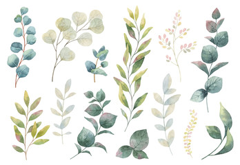 Hand drawn vector watercolor set of herbs, wildflowers and spices.