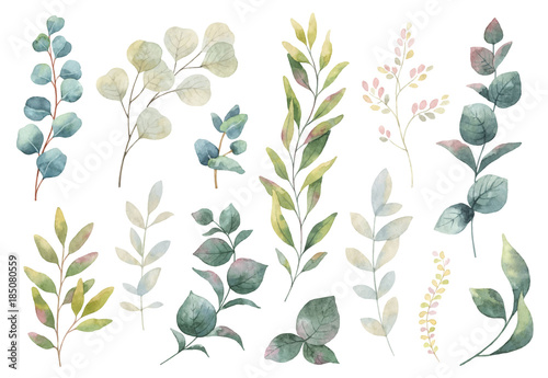 Naklejka premium Ręcznie rysowane wektor zestaw akwarela ziół, kwiatów i przypraw.