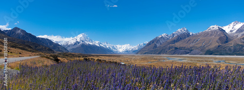 Snowcapped mountains with purple wildflowers in field in foreground