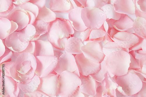 Roses petals background
