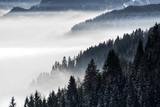 Zalesiony górski stok w nisko leżącej dolinie mgły z sylwetkami wiecznie zielonych drzew iglastych spowitych mgłą. Sceniczny śnieżny zima krajobraz w Alps, Bavaria, Niemcy. - 185094302