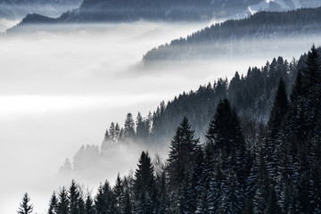 Obraz na SzkleForested mountain slope in low lying valley fog with silhouettes of evergreen conifers shrouded in mist. Scenic snowy winter landscape in Alps, Bavaria, Germany.