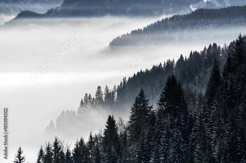 zalesiony-gorski-stok-w-nisko-lezacej-dolinie-mgly-z-sylwetkami-wiecznie-zielonych-drzew-iglastych-spowitych-mgla-sceniczny-sniezny