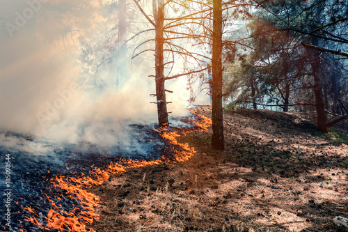 Photo  fire burn forest