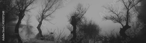 Poster Taupe Spooky dark landscape showing silhouettes od trees in the swamp on misty night