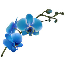 Orchid. Tropical Flowers. Floral Vector Background. Blue.  Border.