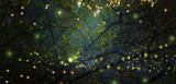 Fototapeta Forest - Abstract and magical image of Firefly flying in the night forest. Fairy tale concept.