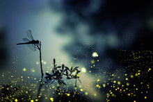Abstract And Magical Image Of Dragonfly Silhouette And Firefly Flying In The Night Forest. Fairy Tale Concept.