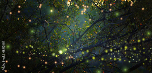 Poster Spring Abstract and magical image of Firefly flying in the night forest. Fairy tale concept.