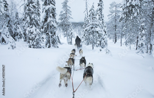 Papel de parede  working husky dogs in arctic Finalnd