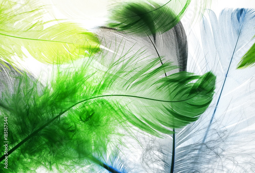 natural backdrop of the beautiful fairy brightly colored feathers on white - 185157544