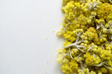 Medicinal Plant Helichrysum Arenarium A White Background . Top View. Yellow Dry Flowers.