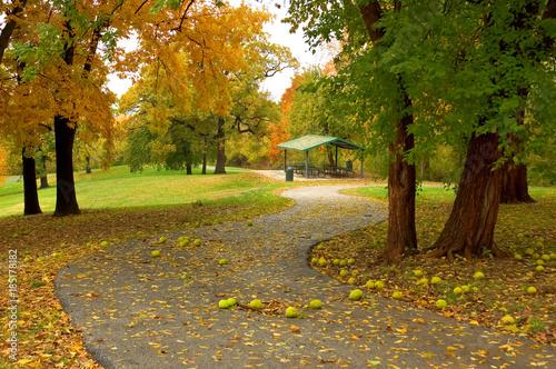 Foto op Canvas Herfst An autumn path in a city park.