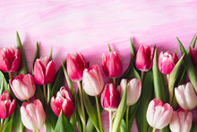 Pink Shade Tulips On Watercolor Background