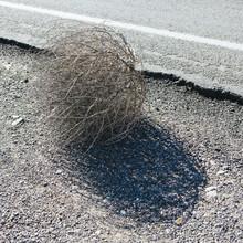 Tumbleweed Along Roadside, Casting Shadow