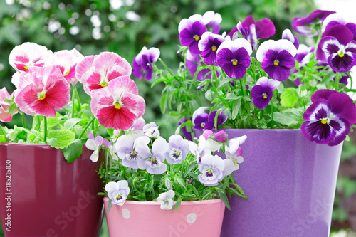 Spoed Foto op Canvas Pansies purple lilac red pansies pots balcony