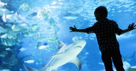 Dziecko ogląda ławicę ryb pływających w oceanarium