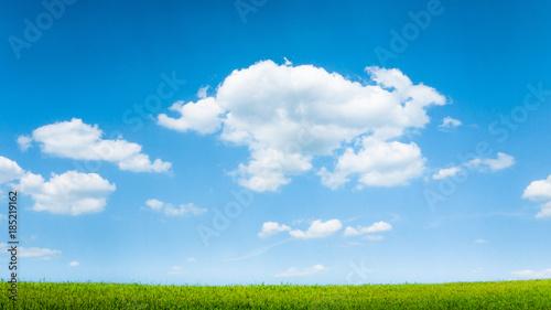 Spoed Foto op Canvas Natuur blue sky and summer green field