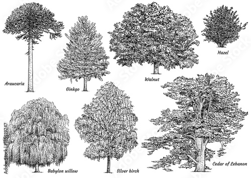 Tree collection illustration, drawing, engraving, ink, line art, vector Canvas Print