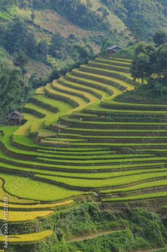 Fotobehang Rijstvelden Terraced rice field in Northern Vietnam