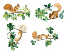 Squirrels And Oak