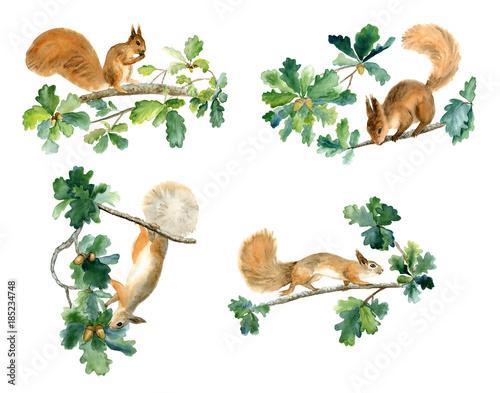 squirrels and oak Wallpaper Mural